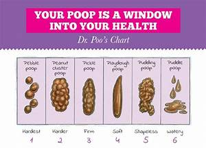 Dr Poo 39 S Family Friendly Chart