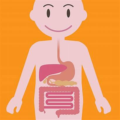 Digestive System Clipart Gut Bloating Digestivo Apparato