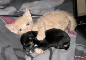 cat puppy kitten with puppy baby teh