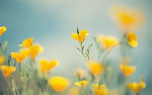 Yellow Flowers Wallpapers Images Photos Pictures Backgrounds