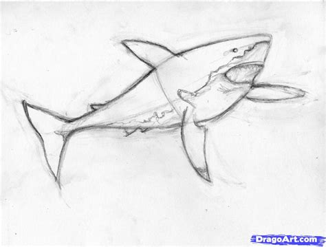draw  shark draw  real shark step  step drawing