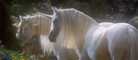 gifs animaux legendaire animes images chimeres