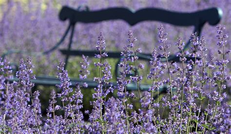 grow  care  walkers  catmint