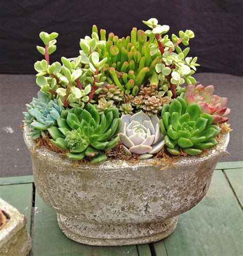 succulents containers services heritage succulents