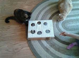 Jouets Pour Chats D Appartement : des jouets pour chat fabriquer soi m me animal ~ Melissatoandfro.com Idées de Décoration