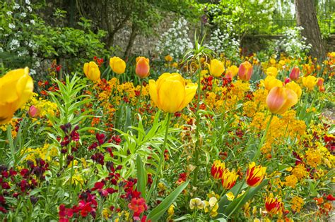planter des tulipes que planter avec des tulipes d 233 tente jardin