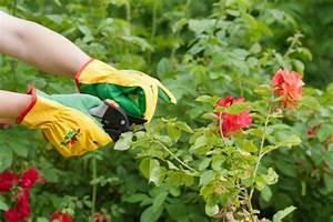 Comment Tailler Les Rosiers : comment tailler les rosiers willemse vous conseille ~ Nature-et-papiers.com Idées de Décoration