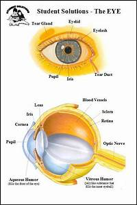 Eye - 6 X 9 Chart  Student Solutions  020380