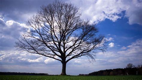Tag des Baumes: Wissenswertes über Bäume