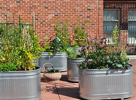 rooftop container gardening edible city gardens bc farms food