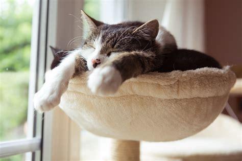 cats  smal hammock stock photo  image