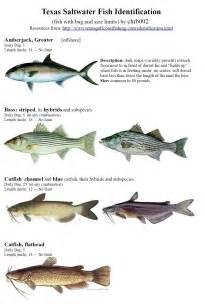Texas Saltwater Fish Identification