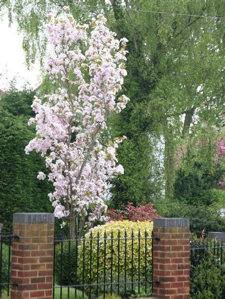 131 Best Columnar Fastigiate And Narrowly Upright Plants
