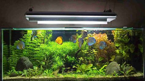 fish aquariums fish tanks in progress betta fish tank betta fish