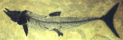 chalk fossils
