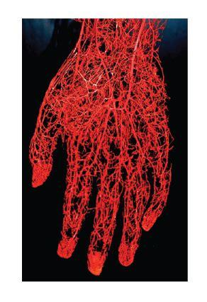 Hart bloedvaten