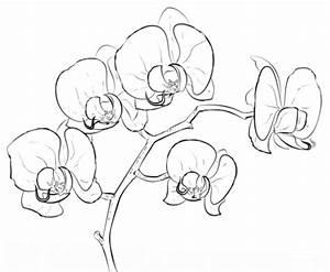 Dibujo de Orquídea para colorear | Dibujos para colorear ...