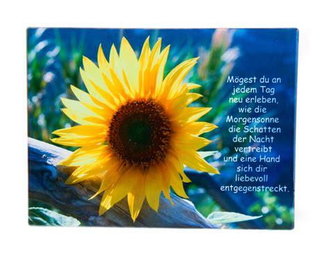 bildtafel sonnenblume