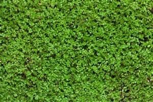 Gazon Pour L Ombre : astuce alternative gazon plantes couvr ~ Premium-room.com Idées de Décoration