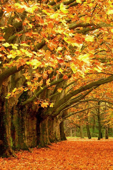 Fall Iphone Wallpaper Leaves by Autumn Leaves Iphone Wallpaper Hd