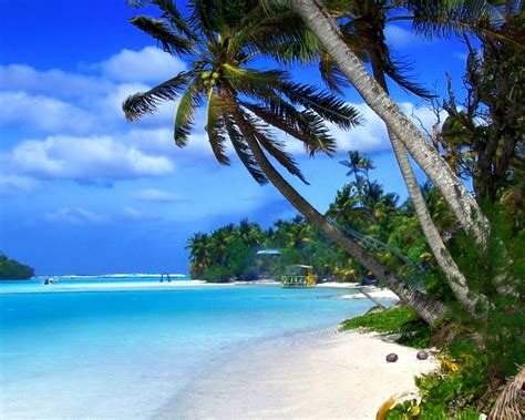 beach  cayman islands tropical landscape ocean blue
