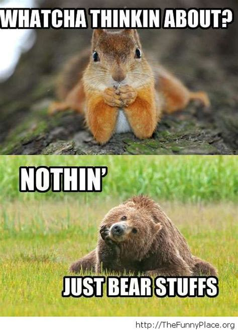 Funny Bear Memes - funny bear memes www pixshark com images galleries with a bite