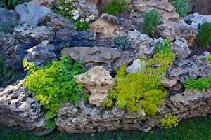 Steinbeet Pflanzen Winterhart : steinbeet pflanzen eine auswahl der sch nsten gr ser und ~ Watch28wear.com Haus und Dekorationen