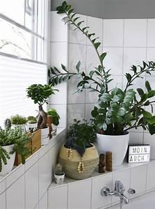 Pflanzen Wenig Licht : pflanzen f rs bad wenig licht inspiration ~ Lizthompson.info Haus und Dekorationen