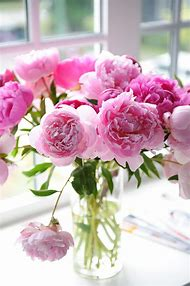 Beautiful Pink Peonies Flowers