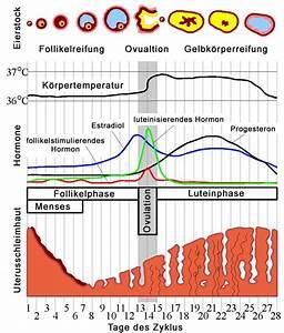 Fruchtbare Tage Berechnen Bei Unregelmäßigem Zyklus : verkehr w hrend oder kurz nach der periode schwangerschaft m glich cyberdoktor ~ Themetempest.com Abrechnung