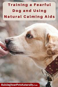calming aids for dogs archives raising your pets With dog training aids