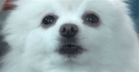 Bork: A Gabe the Dog Appreciation List   I Can Has