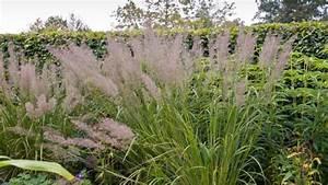 Gräser Im Garten Gestaltungsideen : gr ser im garten haloring ~ Eleganceandgraceweddings.com Haus und Dekorationen