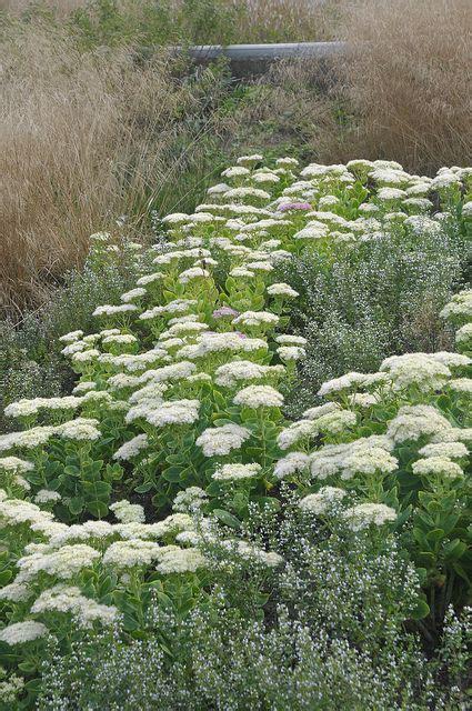 Drought Tolerant Border Plants