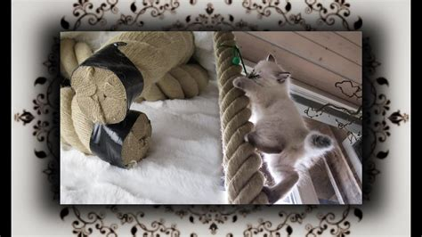 diy tauwerk kletterseil aus hanf fuer kitten hemp