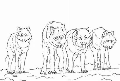 Wolves Clans Jam Wikia Animal