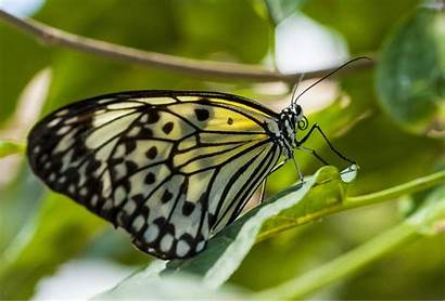 Butterfly Zoom Nature Close Macro Insects Desktop