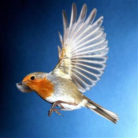 major characteristics  birds animals momme