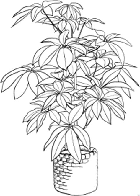grosse pflanze im blumentopf ausmalbild malvorlage blumen