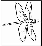 Dragonfly Coloring Pages Printable Template sketch template