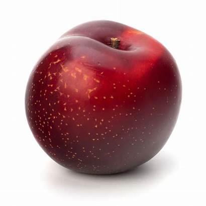 Plum Fruit Coloured Skin Casselman Plums Flesh
