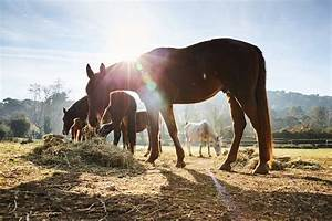 Cindy Ozmun The Importance Of The Horses Respiratory