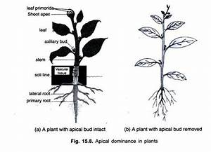Plants Growth and Development (explained with diagram)