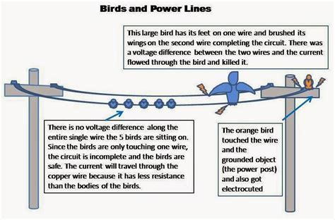 electrical engineering world  birds dont