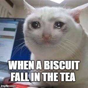 Crying Cat Meme - crying cat imgflip