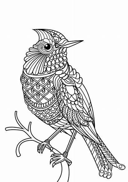 Coloring Birds Children Simple Pages Animals
