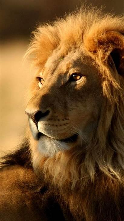 Lion Roaring Iphone Animals Plus