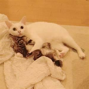 2 Gattini Hanno Un Disperato Bisogno Di Una Madre Perché Abbandonati Dalla Propria E Poi