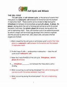 The Cell Cycle  U0026 Mitosis Learning Quest