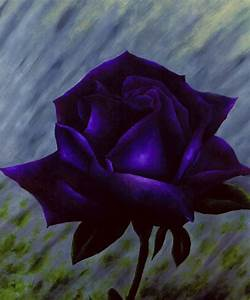 Purple Rose by Brandon Sharp
